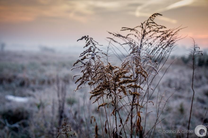 frosty sketch